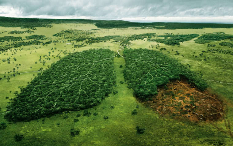 The Amazon Fire's Effect On the Environment